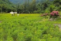 Đến Nha Trang tham quan vườn hoa cánh bướm Yang Bay